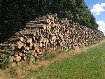 Montagne de bois de chauffage dans le 79 Bressuire